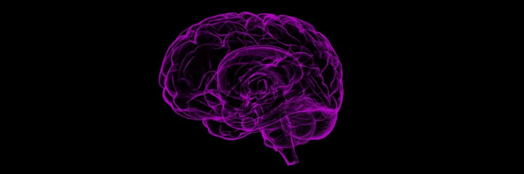 Exercício Físico, Cérebro e In(evolução)